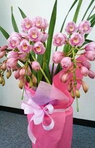 flower_141211